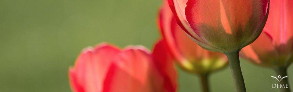 4 Artikelempfehlungen zu Achtsamkeit
