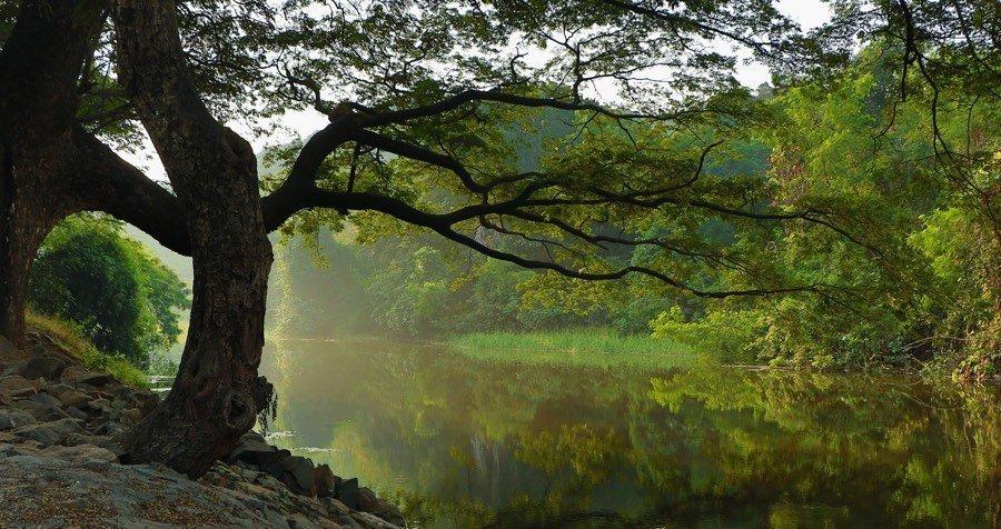 Achtsame Menschen sind wie ein stiller Waldsee, zu dem abends scheue Rehe zum Trinken kommen